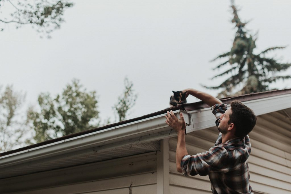 Man rescues kitten from the roof of a shed