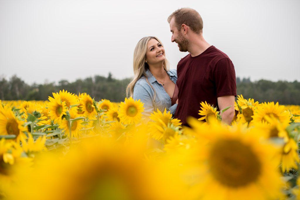 Edmonton Sunflower Field photography Session at Sturgeon Sunflowers